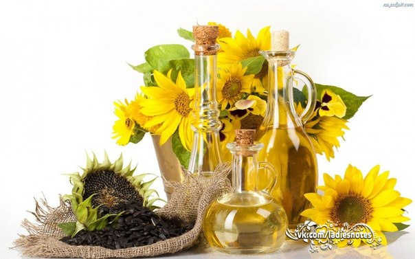 Разнообразие растительных масел и использование их в кулинарии