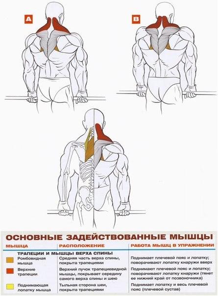 Как накачать шею в домашнем условие