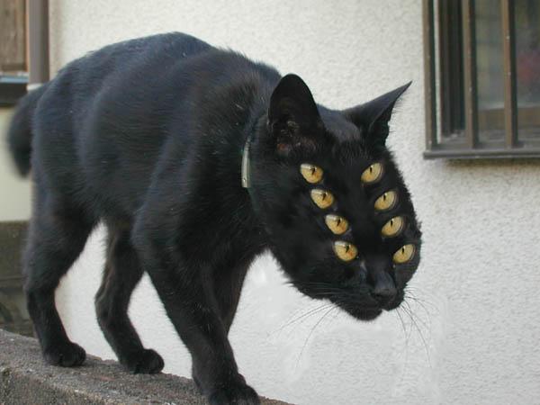 фото борзого кота