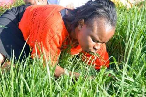 Проповедник призвал паству съесть церковный газон, чтобы приблизиться к Богу..