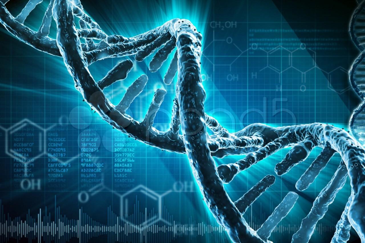 ДНК глазами программиста