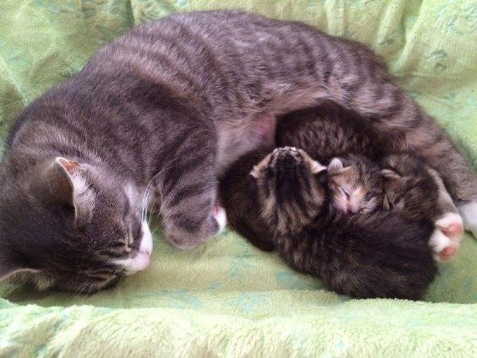 """""""Это Никита, Дима и Алина!"""" У кошки-кукушки родились котята, но один из них в последствии оказался фальшивым"""