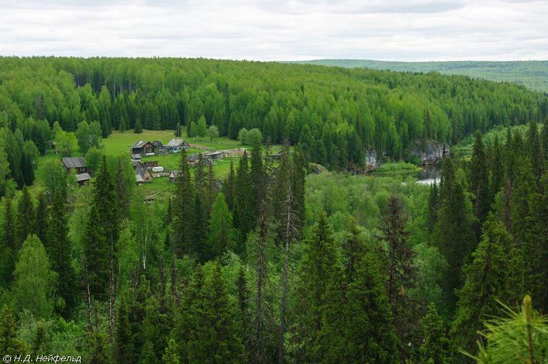 Девственный лес видео фото 779-581