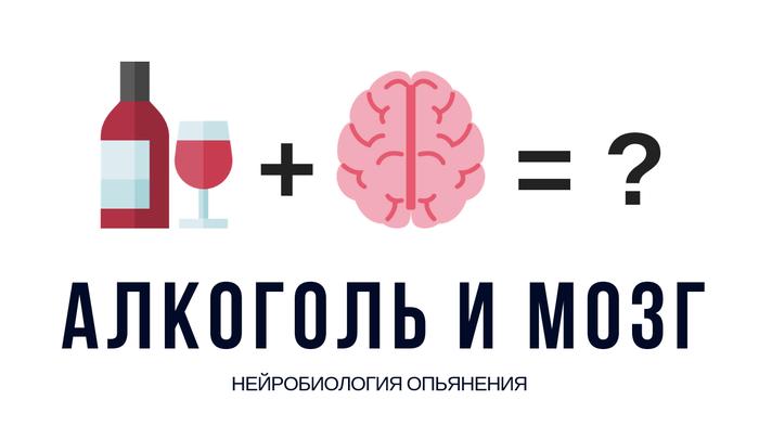 Как алкоголь влияет на мозг? Алкоголь, Мозг, Наука, Биология, Химия, Видео, Гифка, Длиннопост