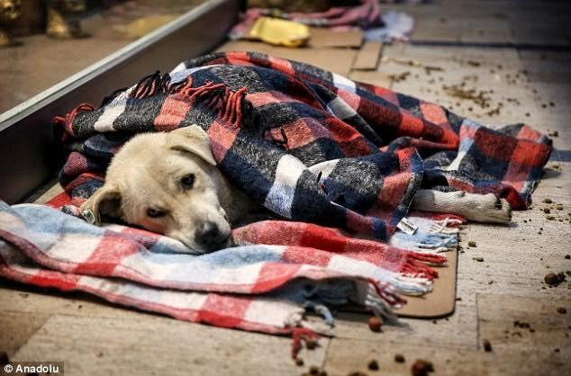 В Турции владельцы кафе и магазинов из-за морозов разрешили впускать бездомных животных