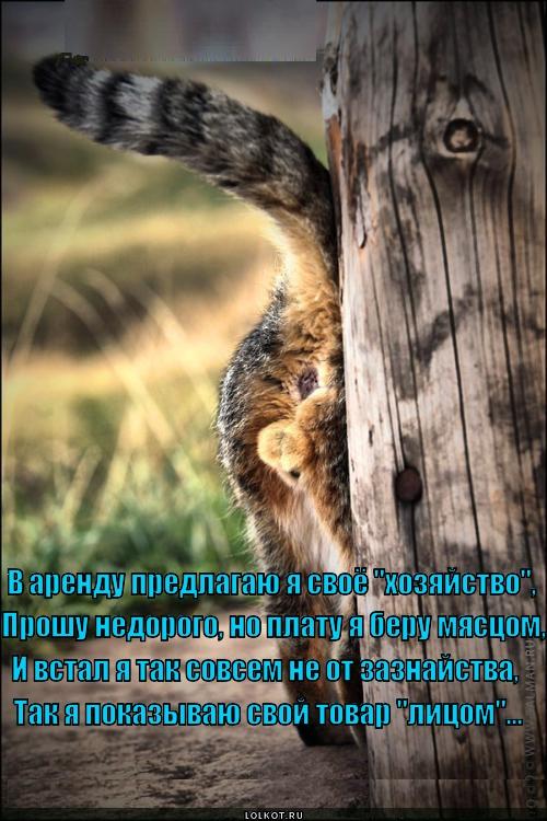 """""""ЛОЛКОТЫ"""". ФОТО КОТОВ С ПРИКОЛЬНЫМИ НАДПИСЯМИ-10"""