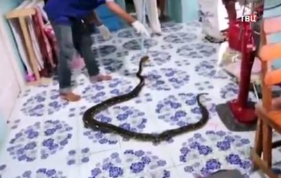 Трехметрового питона нашли в спальне ребенка в Таиланде. Видео