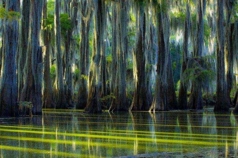Мистическое озеро Каддо