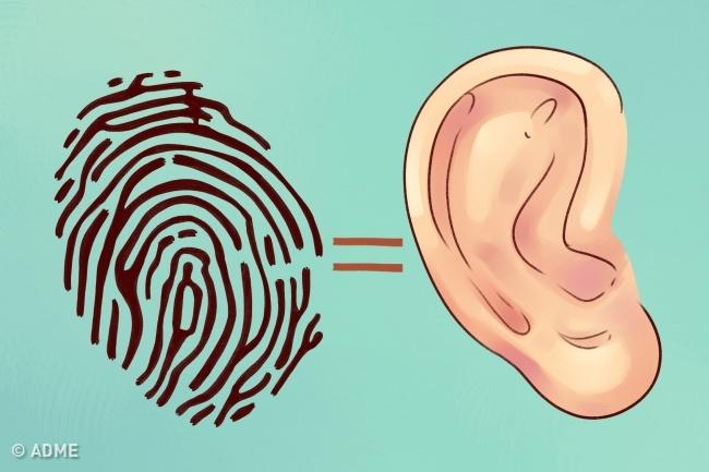 Узнайте, что ваши уши говорят о вас