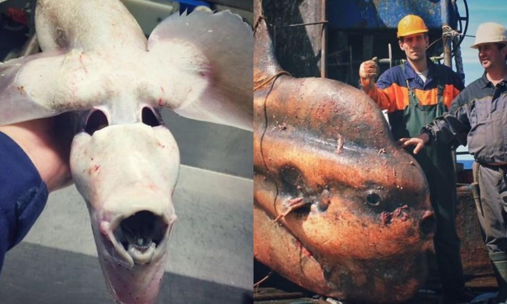 Российский рыболов постит ужасающие создания из глубин моря, и это захватывает дух — фото