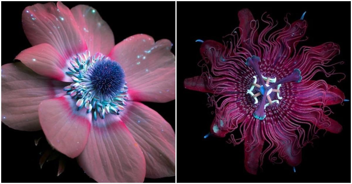 Фотохудожник открывает миру диковинный флуоресцентный свет живых цветов