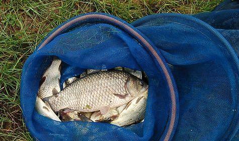 Сохранение улова в теплое время года