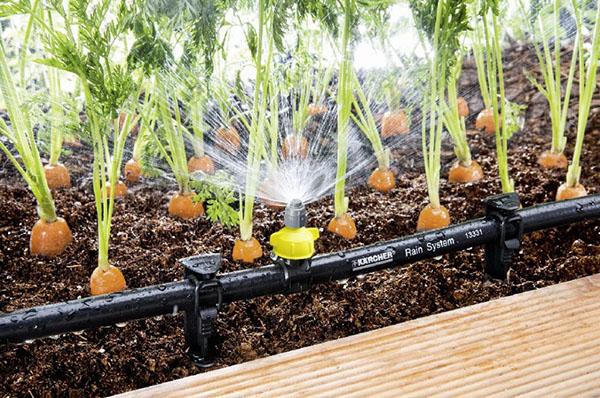 Забота дачника о своих растениях — автоматический полив грядок