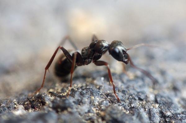 Оригинальные способы борьбы с вредными насекомыми, проверенные нашими предками