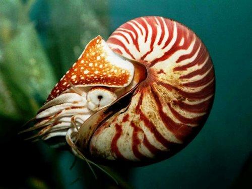 Топ-25 странных доисторических животных, которые существуют по сей день