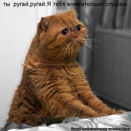 Стоит ли наказывать кота?