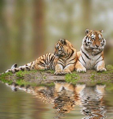 отражение в воде природа 18 (381x400, 141Kb)