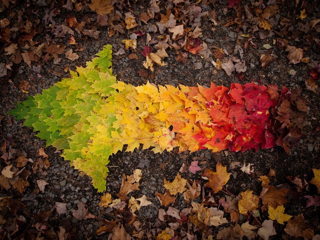 fall03 10 осенних фотографий, которые стали хитами в блогах