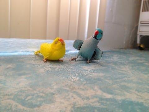 Попугай пытается обаять само…