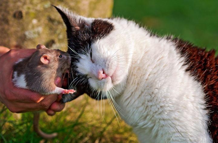 Кот и мышь лучшие друзья