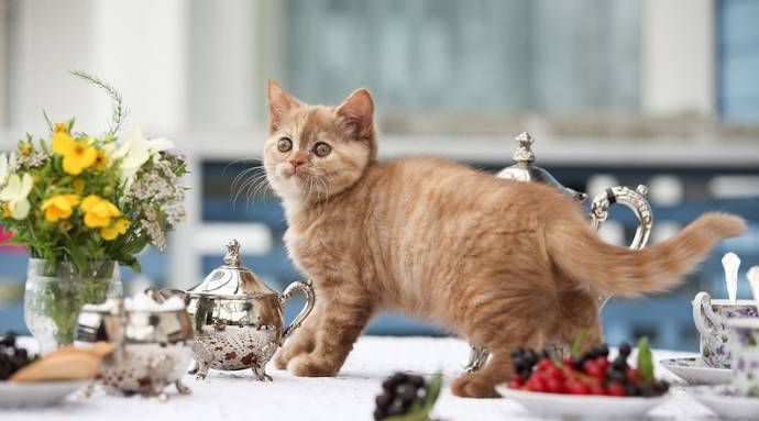 Домашние питомцы: Кошка лази…