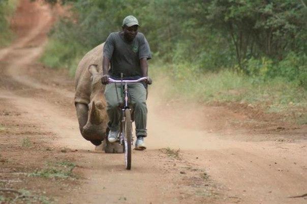 Отличный способ научиться быстро ездить на велосипеде.