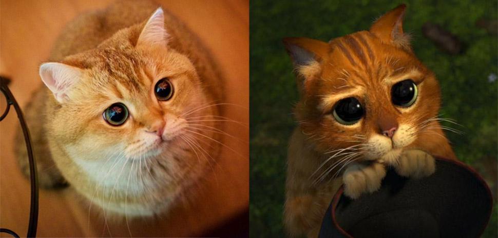Хосико — настоящий Кот в сапогах из «Шрека»