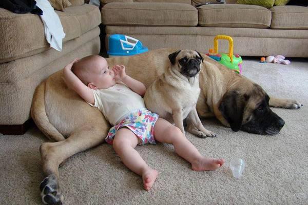 Эти фотографии доказывают, что дети должны расти с домашними животными. Это просто потрясающе мило!