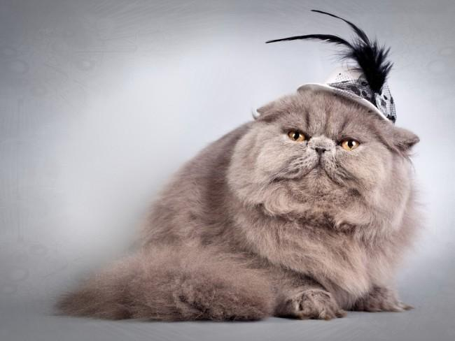 15 забавных котов, в которых вы с легкостью узнаете себя