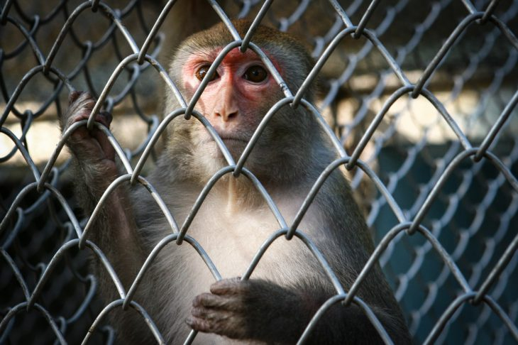 Так здесь заведено: эксперимент на обезьянах, который показал всю сущность людей