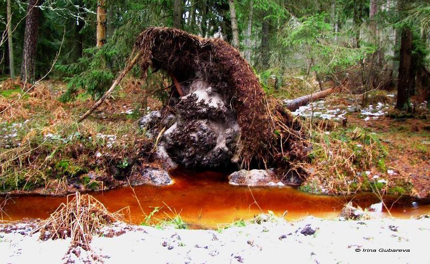 Кровавые реки в национальном парке под Калининградом