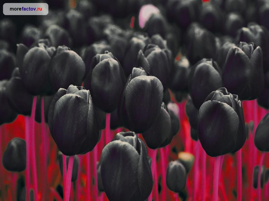 Самые редкие и дорогие цветы планеты