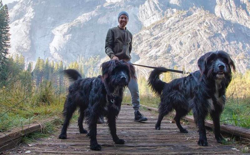 Путешественник спас щенков в пустыне, а они подарили ему любовь и путешествие всей его жизни