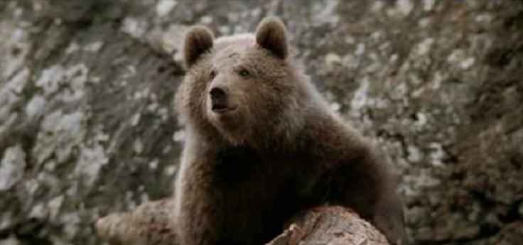 Медвежонок и пума. Никогда не сдавайся!