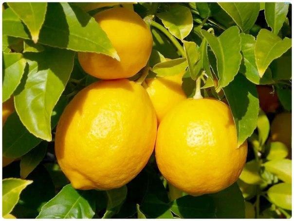 11 вариантов использования лимона в быту.