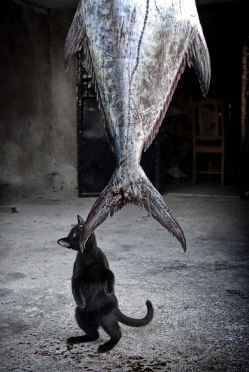 Домашние животные, застигнутые врасплох (38 фото)