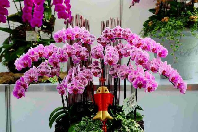Цветы орхидеи фото уход в домашних условиях