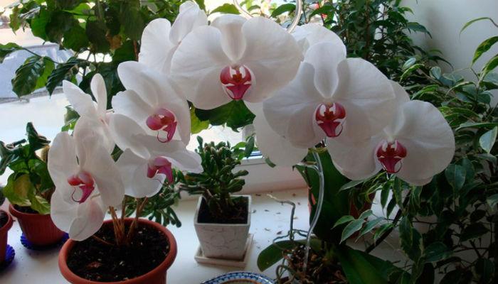 Где лучше всего разместить орхидеи - советы опытного садовода