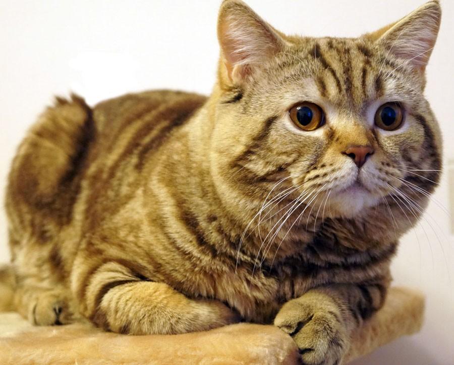 Die Zeit: Почему кошек любят…