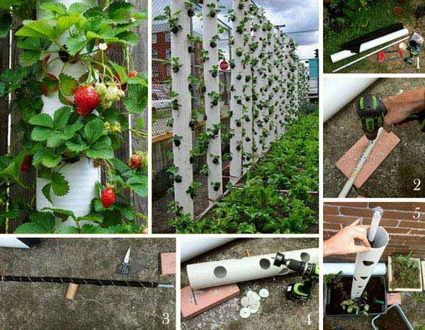 24-Highly-Creative-and-Clever-Gardening-Tricks-to-Enhance-Garden-homesthetics-decor-7