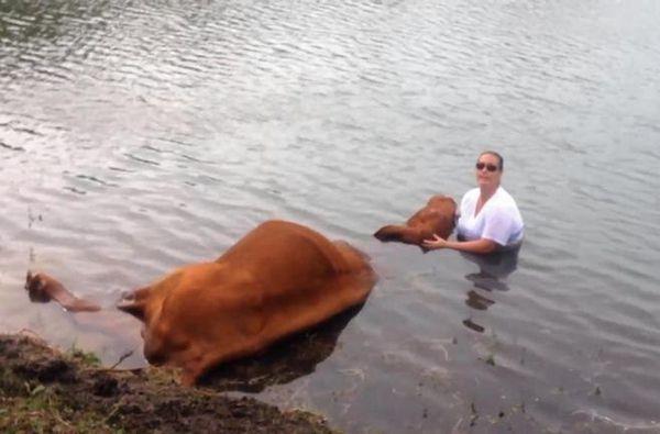 Полицейские 3 часа держали голову быка над водой помощь, уважение, животные, люди