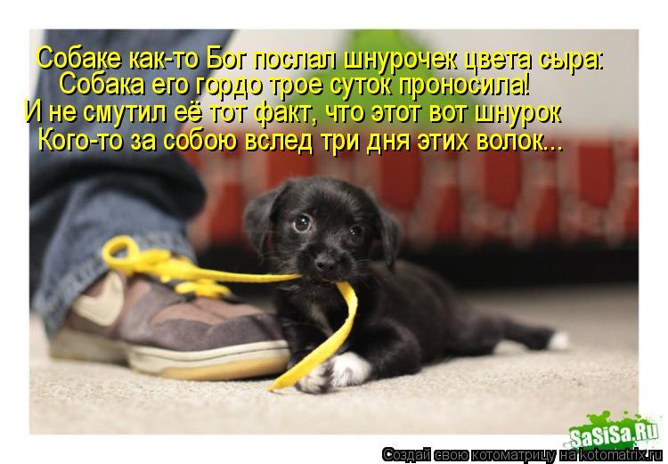 Котоматрица: Собаке как-то Бог послал шнурочек цвета сыра: Собака его гордо трое суток проносила! И не смутил её тот факт, что этот вот шнурок Кого-то за с