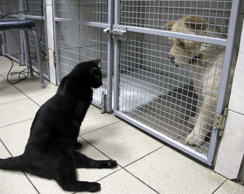 Спасенный кот не может ходить, но помогает другим больным животным