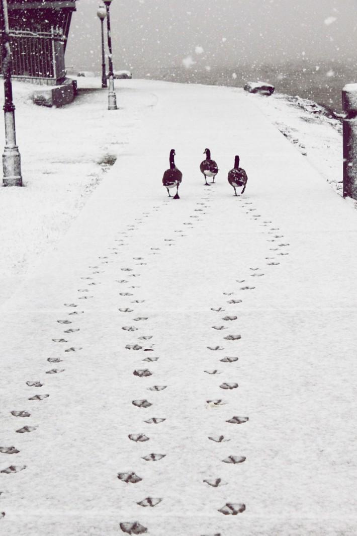 Живая, смешная и очень милая зима!