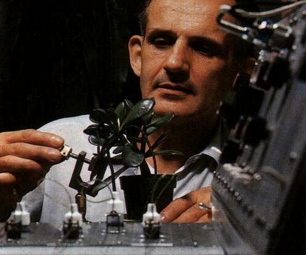 А вы знали, что растения умеют думать? Вот как это доказали
