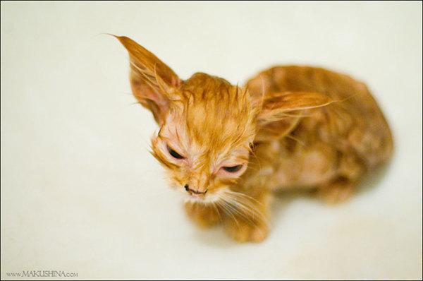 Вся в синяках, полудохлая и блохастая... История спасения котенка