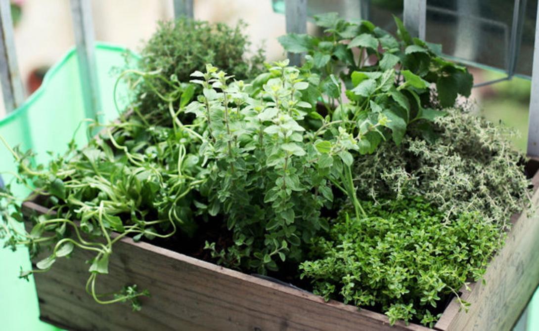 Box o' herbs. ewainthegarden.bl... - herb gardening today.
