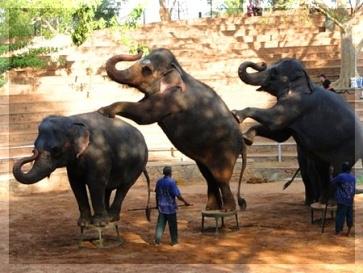 Поехали с нами на Шри-Ланку в ноябре 2013 (мы-веселая дружная компания).Едем смотреть природу, животных и на пляже поваляться