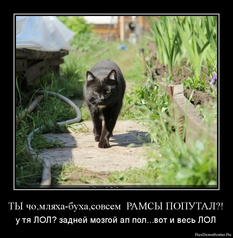 про один котЕцкий сайт...Частное мнение )))