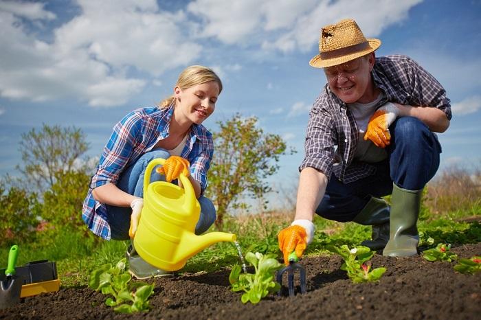Когда сажать рассаду в 2017 году: благоприятные дни для посадки овощей